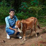 Cea mai mica vaca