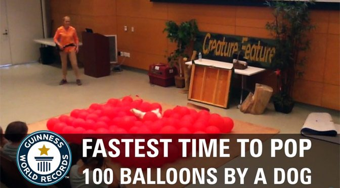 Cel mai rapid caine care a spart 100 de baloane