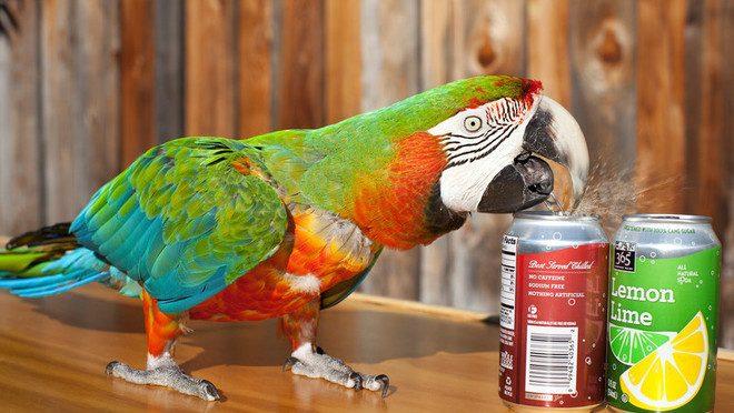 Cele mai multe doze deschise de un papagal