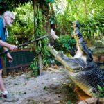 Cel mai mare crocodil
